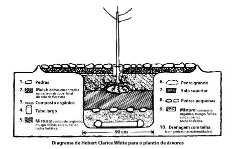 diagrama_plantioanjos_curvas