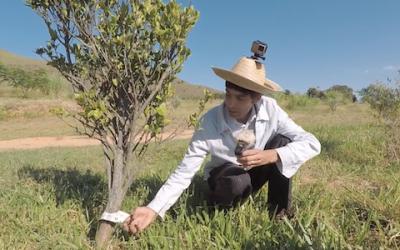 Nosso Pomar – Agricultura no IBC